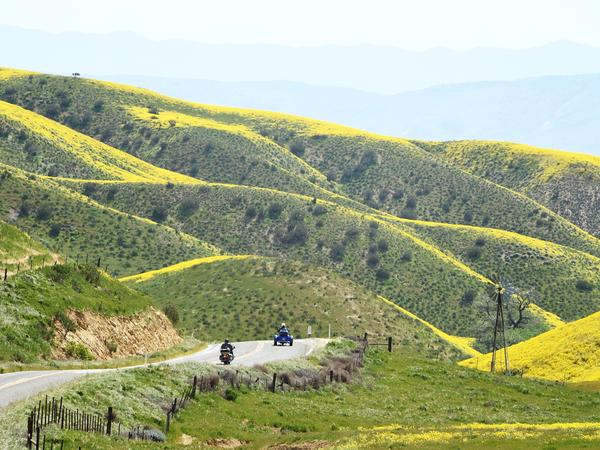 """Motorcyclists enter the Carrizo Plain National Monument near Taft, Calif., during a wildflower """"super bloom"""" on Wednesday. After years of drought, an explosion of wildflowers in Southern and Central California is drawing record crowds."""