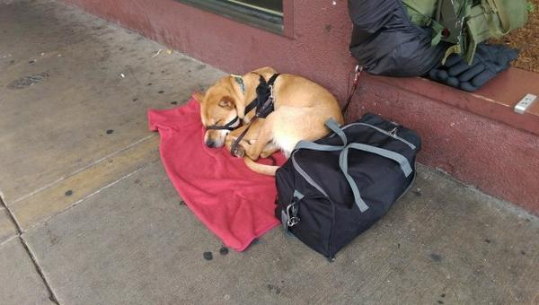 <p>A dog sleeps on a sidewalk in downtown Eugene, Oregon.</p>