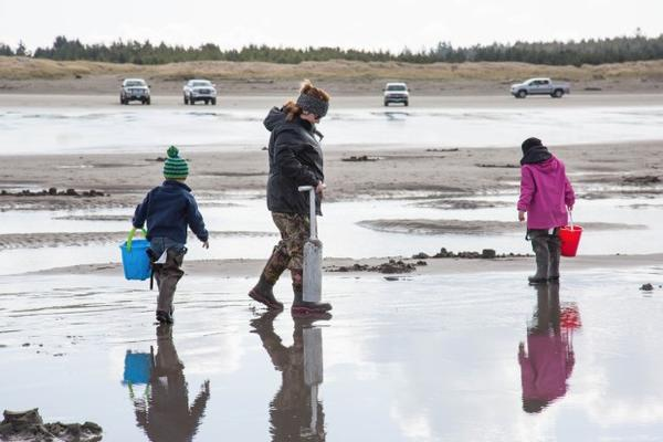<p>Thousands of people hauled their shovels and buckets to the shore for the first weekend of open razor clam season on the Washington coast.</p>