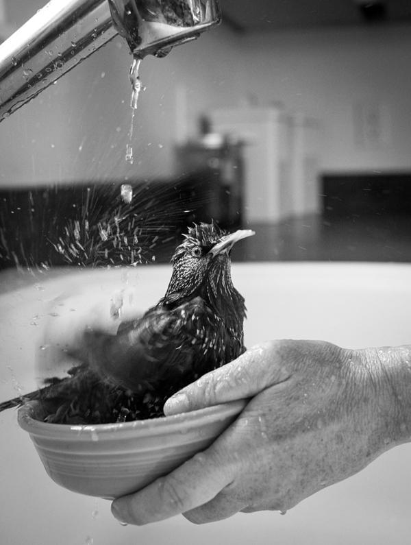 Carmen takes a bath in a bowl.