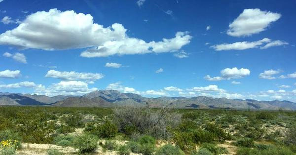 Wide open spaces in Arizona, during Kathy's road trip. (Kathy Gunst for Here & Now)