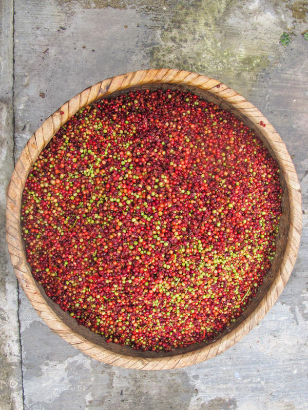 A basket of schisandra berries drying in the sun. Today, the FairWild schisandra project has helped families set up a 23-village cooperative and establish contracts with buyers, including Traditional Medicinals, that pay a set price that is at least 30 percent more than the market rate.