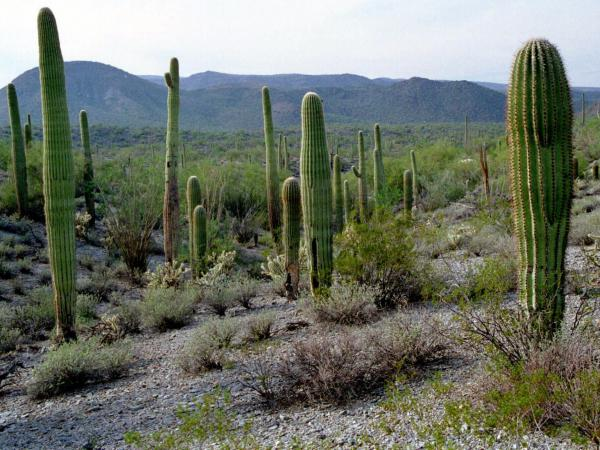 Like a good cactus? It's clear the Sonoran Desert National Monument in Arizona is right up your alley.