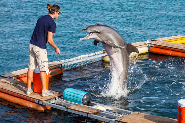 Four dolphins from the Navy's Marine Mammal program have been training in Key West for the last three weeks.