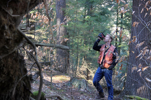 UVM forest ecologist Bill Keeton uses a laser rangefinder to measure the height of a tree in UVM's Jericho Research Forest.