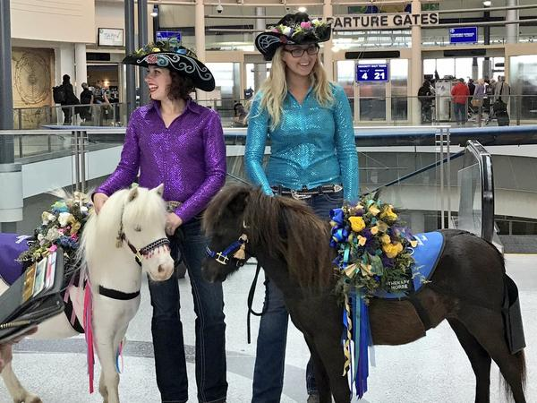 During Kentucky Derby season, therapy horses dress the part as they greet passengers at the Cincinnati/Northern Kentucky International Airport.