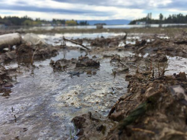 The Environmental Protection Agency says it has detected low levels of volatile organic compounds and semi-volatile organic compounds in samples taken from the oily sheen on the shoreline of Flathead Lake near Somers.