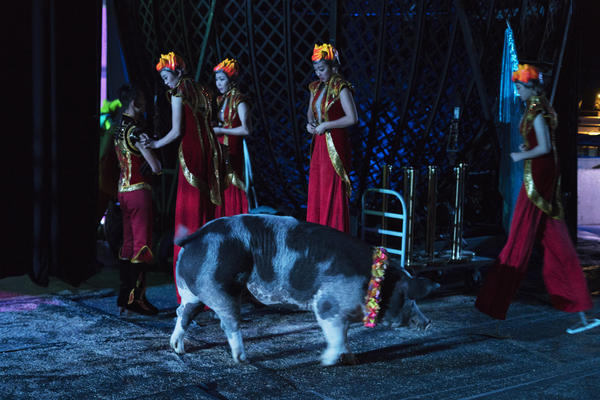 A large pig walks backstage as performers on stilts prepare to enter the arena. The circus features two 700-pound pigs, who perform with the dogs. They're smart enough to learn almost any trick, says trainer Hans Klose — but they're rather limited in the agility department.