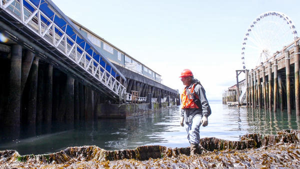 <p>University of Washington Research Scientist Jeff Cordell is overseeing the construction of a salmon-friendly seawall at Seattle's waterfront.</p>