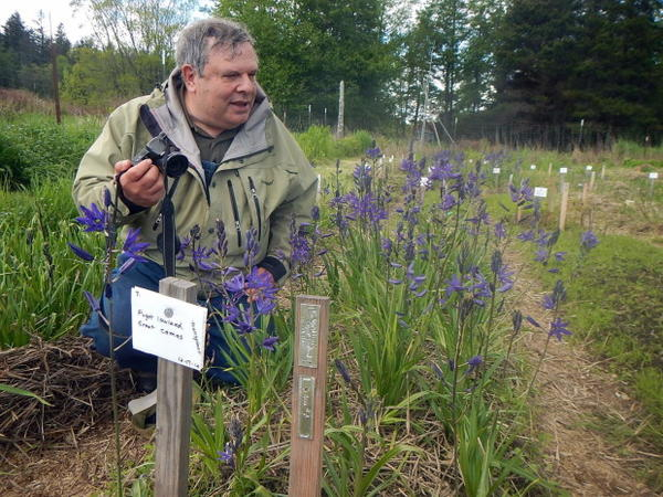 <p>Russel Barsh and a row of camas at the Kwiaht research garden on Lopez Island.<br /><br /></p>
