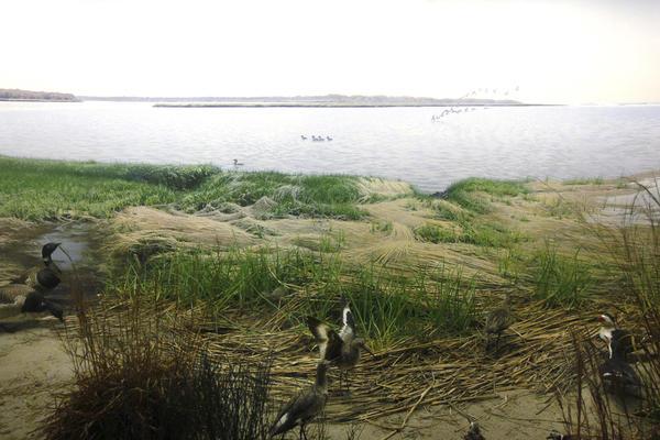Eastern Coastal Birds diorama