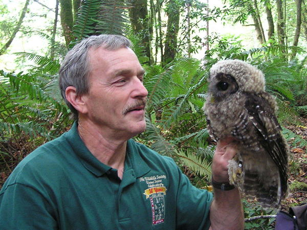 "Lowell Diller holds a fledgling spotted owl that he banded at a site where barred owls had been removed. ""This owlet would almost certainly not be alive today without active intervention,"" he says."