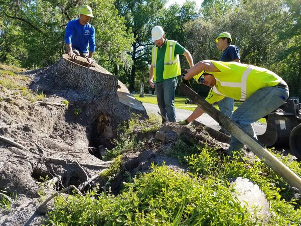 A tree removal crew moves grave markers that were disrupted when Hurricane Matthew uprooted a large sweet gum tree. Once the stump is gone, city officials say it will take a lot of research to restore the monuments. (Emily Jones/GPB)