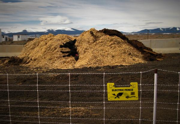 Livestock carcass composting site outside Wisdom, MT.