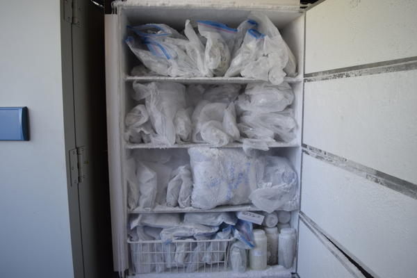 OSU researchers use the walleye in this freezer to test for microcystin.