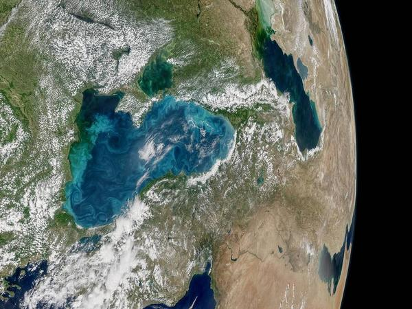 A mosaic of images from NASA's Aqua satellite taken on May 29 shows an ongoing phytoplankton bloom in the Black Sea.