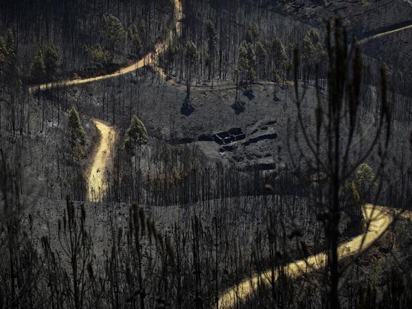 A wildfire in Portugal has killed at least 64 people since it began on Saturday. Above, a charred forest near Pedrogao Grande on Tuesday.