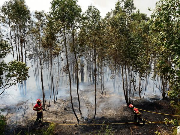 Firefighters combat a wildfire in the area of Pedrogão Grande, on Tuesday.