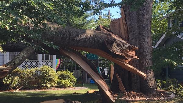 A red oak in Washington, D.C., recently developed a fatal crack in its trunk. Part of the tree fell before crews could dismantle it.