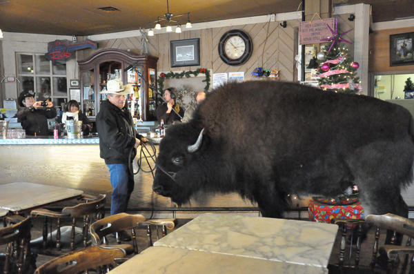 Jim Sautner and his pet buffalo Bailey Jr.
