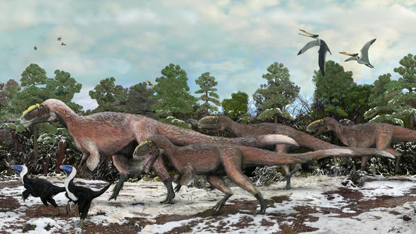 An artist's impression of a group of <em>Yutyrannus</em>. The 30-foot-long dinosaurs were covered with downy feathers — likely to keep the animals warm.