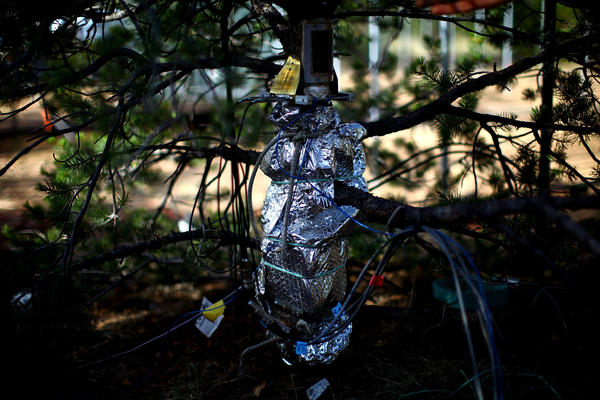 Instruments wrapped around the stem of a tree measure its diameter every few minutes.