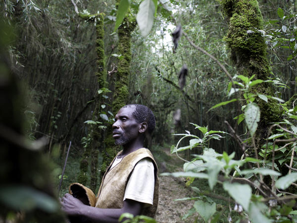 The forests in which the Batwa lived are rich with flora and fauna. After the formation of Mgahinga National Park, they were forced out and prohibited from hunting or gathering.