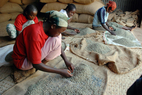 Workers separate beans at a coffee warehouse in Yirgacheffe, Ethiopia. Coffee originated in Ethiopia, but now grows in more than 50 countries around the world.