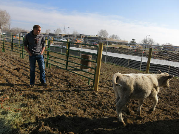 Reece Melton, 18, of Longmont, Colo., is one of 580,000 FFA members across the country.