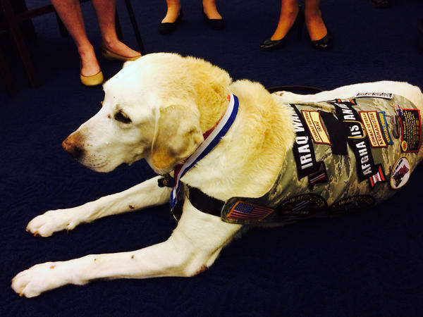 Carlos, one of five war dog veterans at a Capitol Hill briefing Wednesday. And not one bark from any of them during a two-hour event.