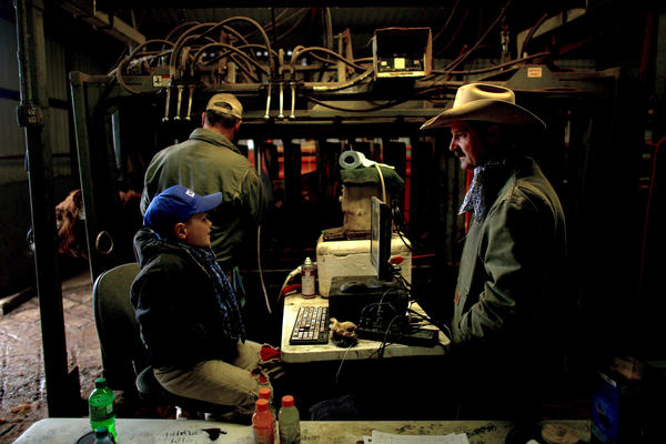 Bull breeder Donnell Brown chats with 9-year-old Cody Hays, who is helping his father, Craig, ultrasound the rib-eyes of about 400 bulls.