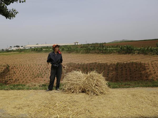A farmer stands near a field in South Hwanghae, North Korea.