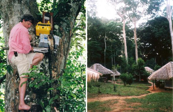 (Left to right) Christopher Clark installed audio equipment in a tree, high enough so that the elephants couldn't smash them; the research team's camp.