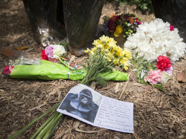 A sympathy card rests at the feet of a gorilla statue at the Cincinnati Zoo & Botanical Garden.