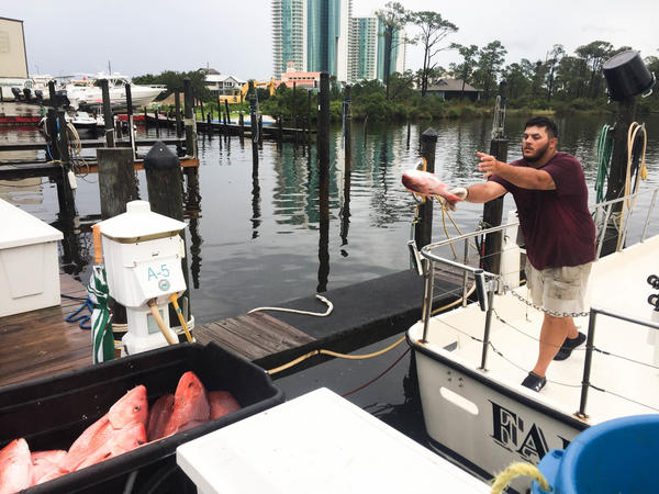 Deckhand Patrick Gallager  tosses the day's catch to the dock from the Fairwater Two charter boat.