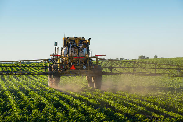 A sprayer covers a soybean field with an herbicide to control weeds.