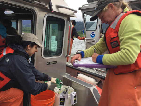 <p>Researchers Angie Munguia, left, and Laurie Weitkamp collect and sample juvenile salmon from the lower Columbia River.</p>