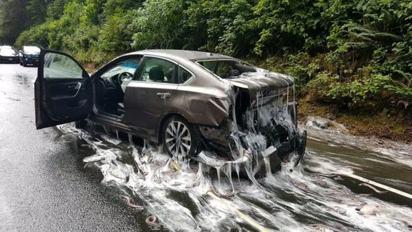 <p>Slime eels cover a car on Highway 101 after a truck carrying the eels overturned.</p>