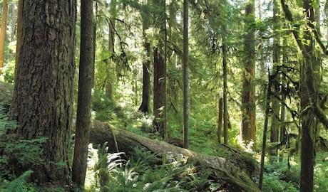 Forests play an important role in protecting the Earth's atmosphere by storing carbon.