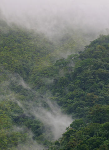 <p>Mist in the rainforest on the slopes of the Arenal Volcano, Costa Rica.</p>