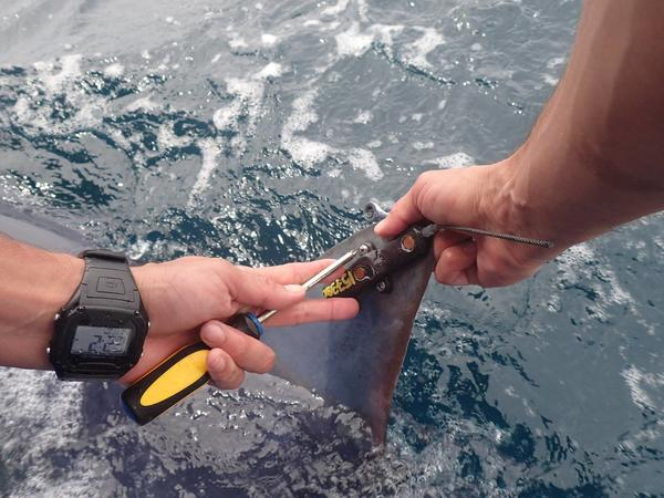 A tagging device used to follow sharks using the artificial reef constructed by researchers.