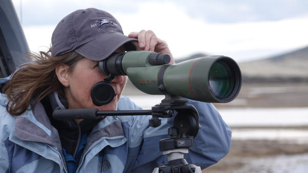 <p>Kait White of Grants Pass saw 43 different species of birds in one day at the Klamath National Wildlife Refuge Complex.</p>