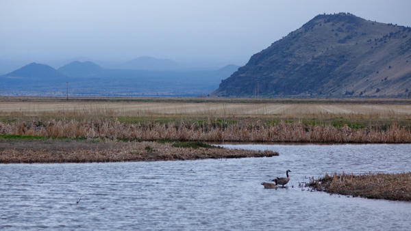 <p>Climax marsh communities and potato fields can be found side-by-side on Tule Lake National Wildlife Refuge</p>