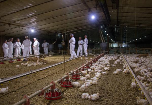 Animal welfare advocates visit a Perdue Farms chicken house.