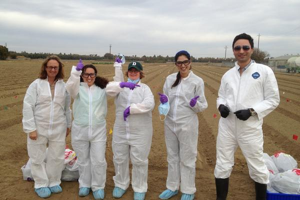 University of California, Davis food safety field scientists Michele Jay-Russell, Paula Kahn-Rivadeneira, Anna Zwieniecka, Navreen Pandher and Peiman Aminabadi celebrate the first day of their experiment testing <em>E. coli</em> survival in soil.