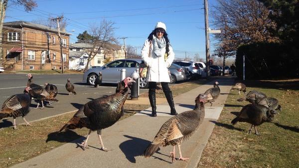 A group of wild turkeys surrounds Joanna Tierno on Mason Avenue in Staten Island. She loves to see the birds roaming the streets of her neighborhood.