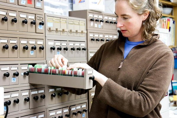 Pathologist Gillian Shaw retrieves glass slides that hold carefully cataloged sections of eye tissue from the Wisconsin lab archive.