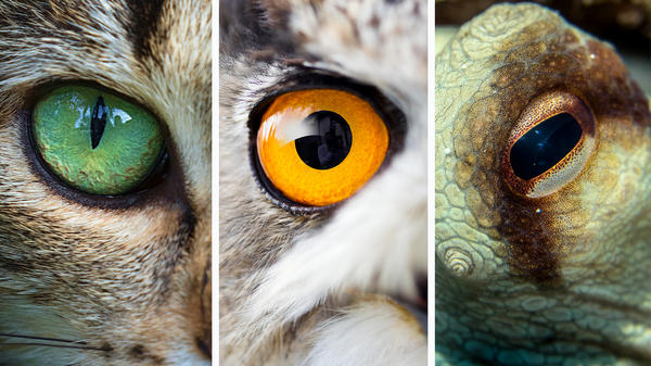 Eyes come in all sizes. These belong to a domestic cat (from left), an owl and an octopus. The Comparative Ocular Pathology Laboratory of Wisconsin has 56,000 specimens in its collection — including 6,000 from more exotic species.