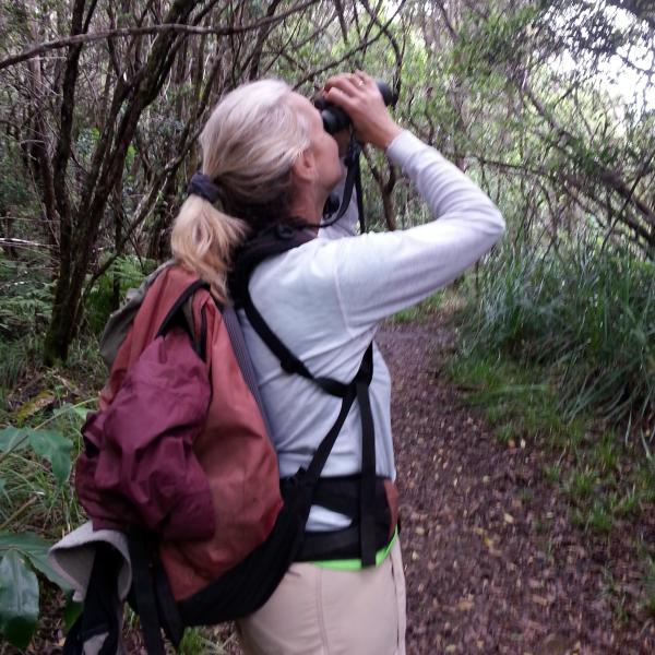 Lisa Crampton searching for birds in Kauai's Alaka'i Forest.