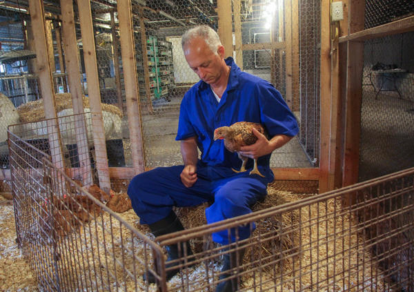 Bruce Stewart-Brown, a veterinarian and senior vice president of Perdue Farms, hold a slower-growing heritage breed chicken.